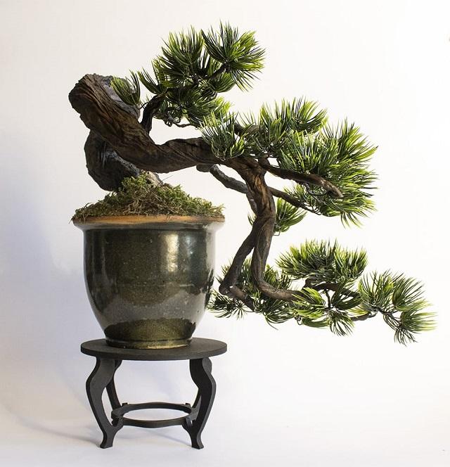 cay-bonsai-dang-huyen